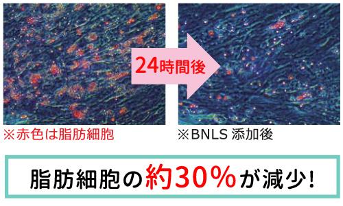 BNLS neo(脂肪溶解注射)