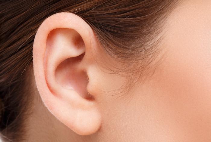 立ち耳 保険適用 大阪
