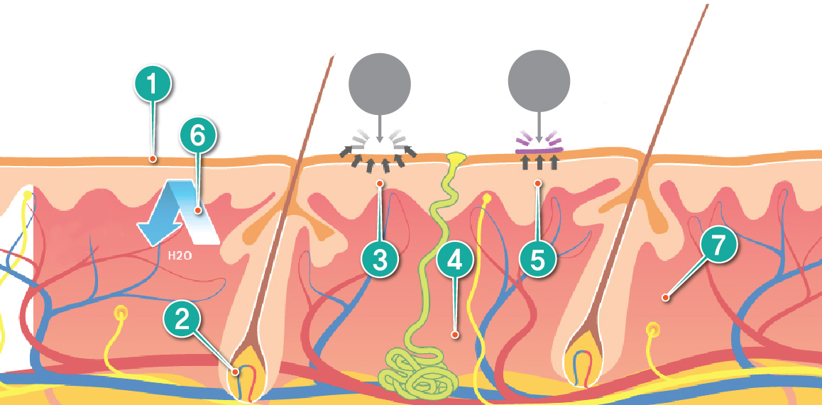サイトカインブースター CytB-neo hscm100 臍帯血幹細胞 毛髪再生 発毛 育毛 ハゲ AGA 薄毛 効果