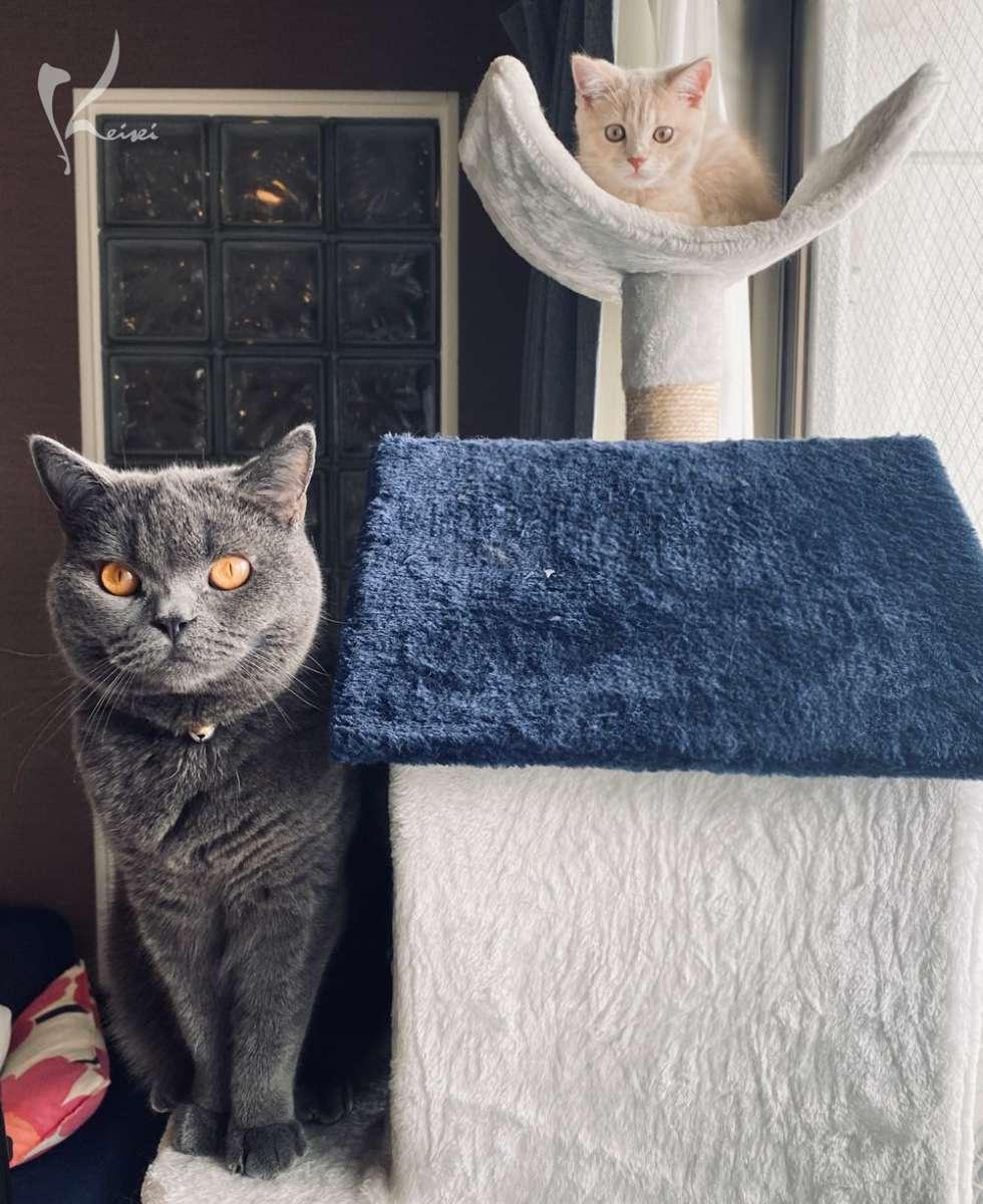 松本先生宅の2匹の猫の写真