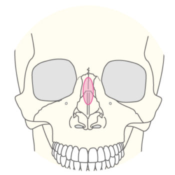 鼻骨骨切り術(鷲鼻修正)のページを公開しました。